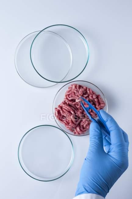 Scientifique prenant avec une pince à épiler de la viande cultivée en laboratoire, image conceptuelle du génie génétique . — Photo de stock