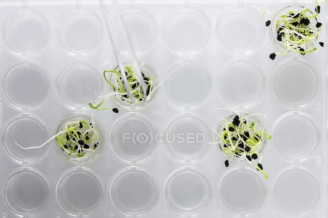 Seedlings growing in laboratory test multiwell, conceptual image of plant research and genetic engineering. — Stock Photo