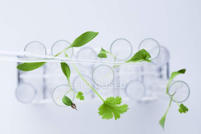 Зеленые растения в пробирках, концепция ботанических исследований . — стоковое фото