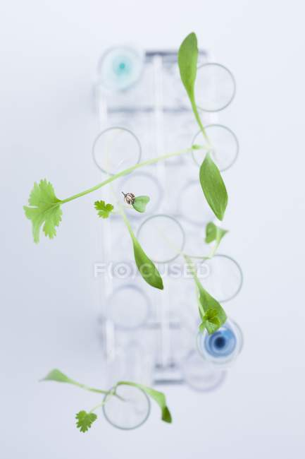 Green plants in test tubes, botanical research concept. — Stock Photo