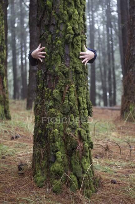 Руки человека, обнимающего ствол мха в лесу . — стоковое фото