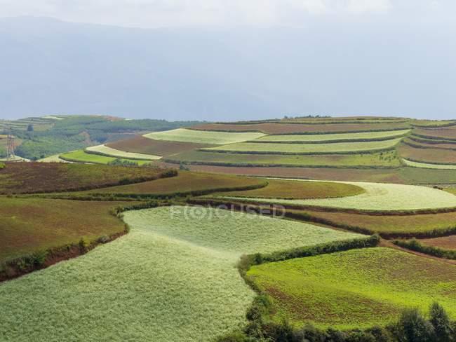 Coltivazioni nelle Terrazze di riso Honghe Hani, Prefettura di Honghe, Contea di Yuanyang, Yunnan, Cina . — Foto stock