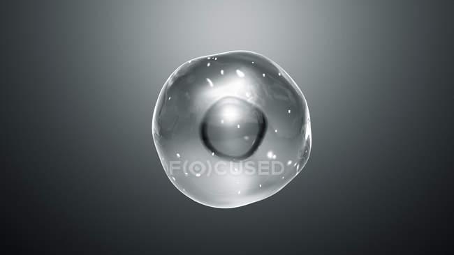 Celda animal con mitocondrias, ilustración digital . - foto de stock