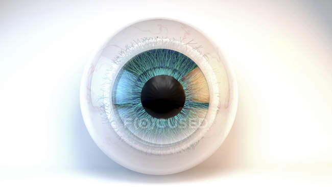 Human eyeball model, digital illustration. — Stock Photo