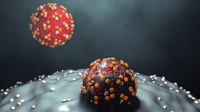 Measles virus particles budding from cells, digital illustration. — Stock Photo