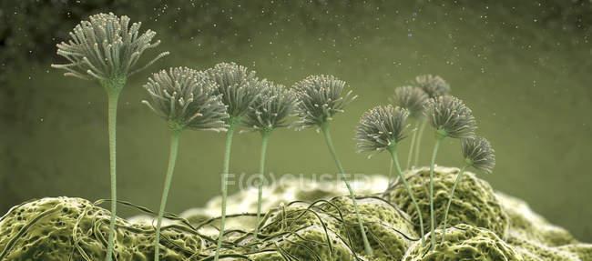 Cuerpos de fructificación de hongos, ilustración digital . - foto de stock