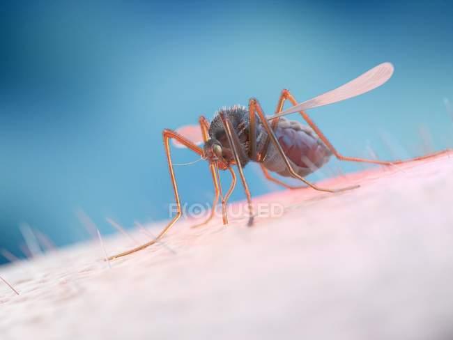 Alimentación de mosquitos con sangre humana, ilustración digital . - foto de stock