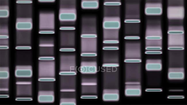 DNA autoradiograph pattern, digital illustration. — Stock Photo
