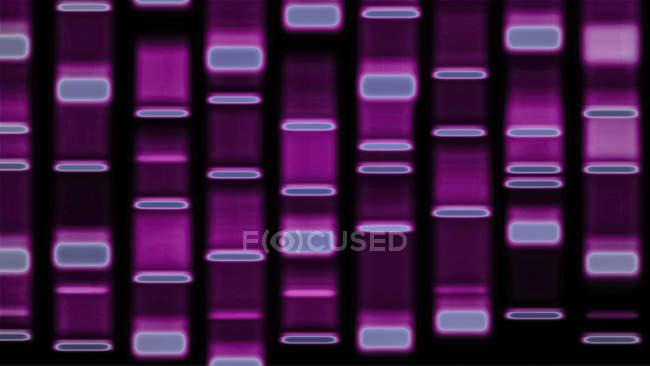 Patrón de autoradiógrafo de ADN, ilustración digital . - foto de stock