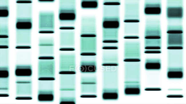 Dna autoradiograph pattern, digitale illustration. — Stockfoto