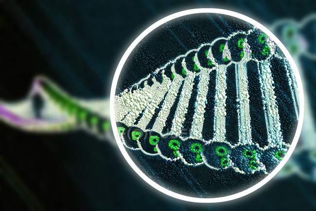 Edición genética, ilustración digital conceptual. - foto de stock