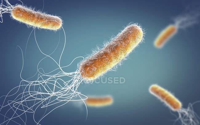 Устойчивые к антибиотикам бактерии Pseudomonas uginus, цифровая 3D-иллюстрация. — стоковое фото
