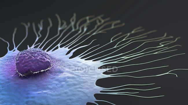 Migração de células de câncer de mama, ilustração 3D digital . — Fotografia de Stock