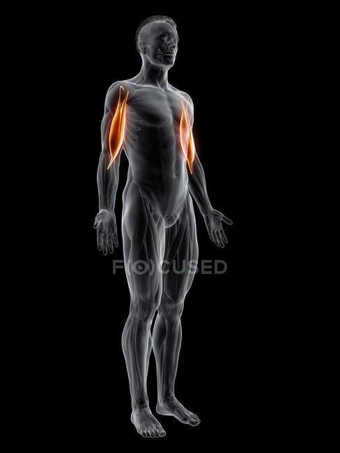 Figura masculina abstracta con músculo bíceps detallado, ilustración por ordenador . - foto de stock