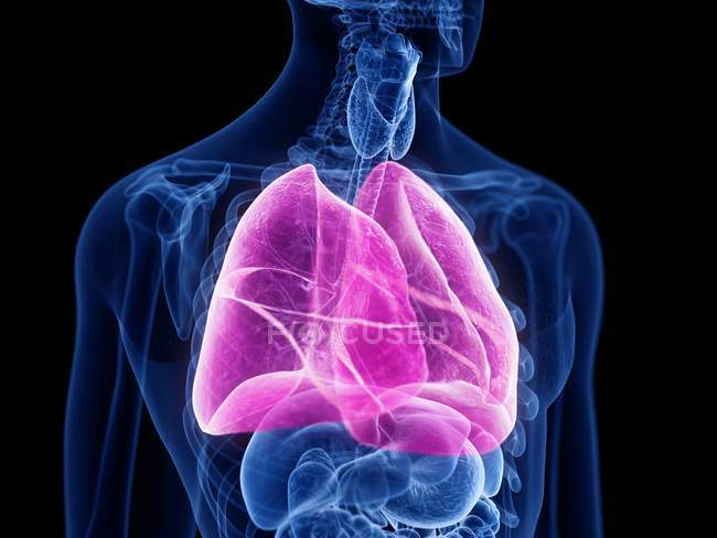 Простий силует самця з кольоровими легенями, комп
