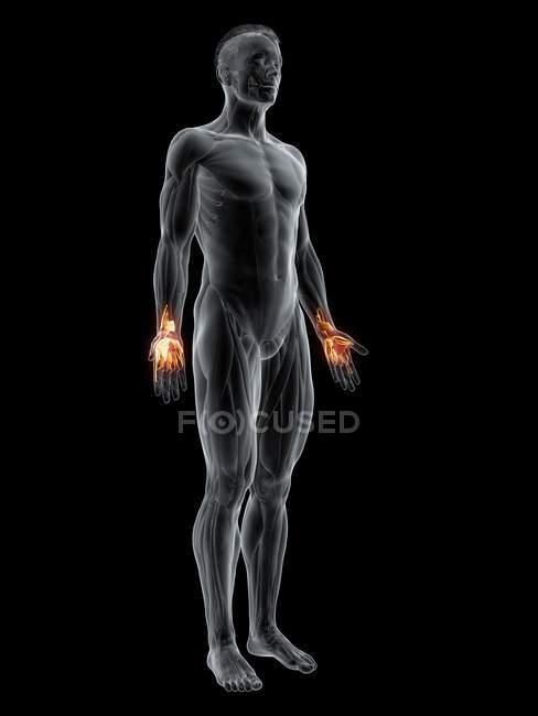Figure masculine avec muscles des mains mis en évidence, illustration numérique . — Photo de stock