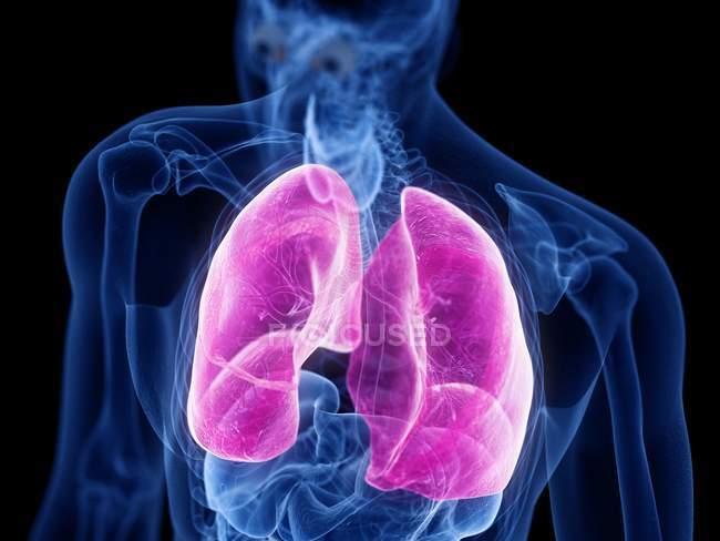 Silhueta masculina transparente com pulmões coloridos, ilustração do computador . — Fotografia de Stock