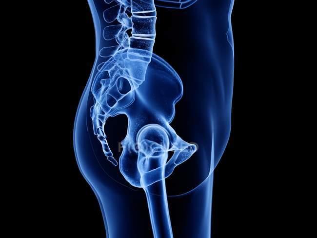 Silueta transparente del cuerpo humano con la articulación visible de la cadera, vista lateral, ilustración digital . - foto de stock