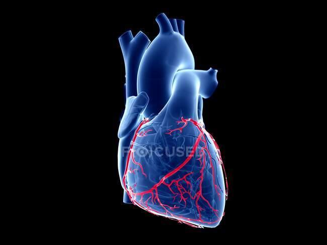 Arterias coronarias, ilustración informática. - foto de stock