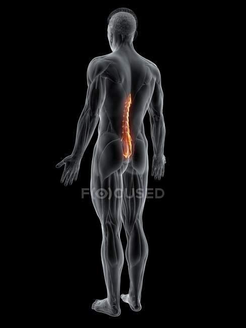 Figura maschile astratta con dettagliata muscolatura MutlimbH s, illustrazione al computer . — Foto stock
