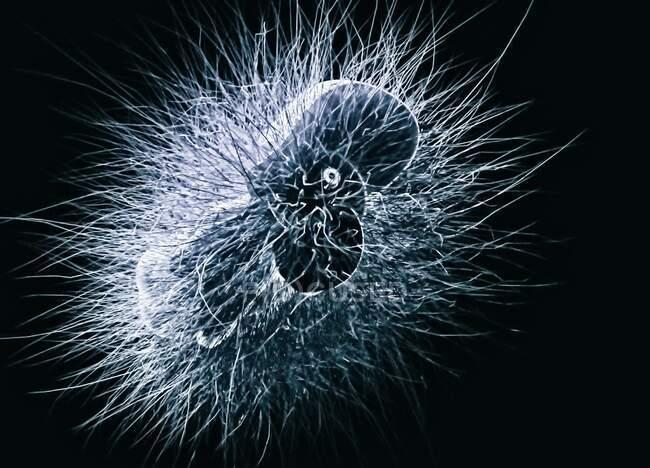 Nahaufnahme von Microbe, konzeptionelle Illustration — Stockfoto