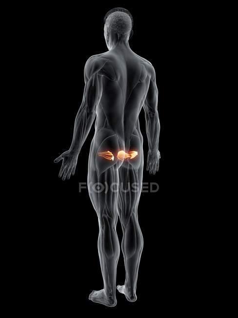 Cuerpo masculino abstracto con músculo Gemelo detallado, ilustración por computadora . - foto de stock