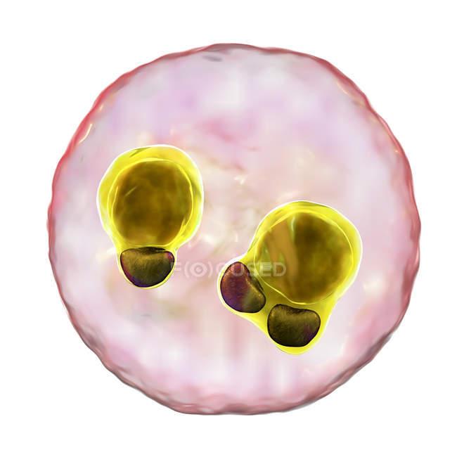 Protozoan Plasmodium falciparum cell, causative agent of tropical malaria, digital illustration. — Stock Photo