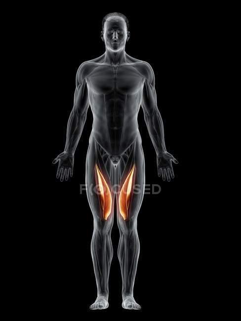Cuerpo masculino abstracto con músculo Vastus medialis detallado, ilustración por ordenador . - foto de stock