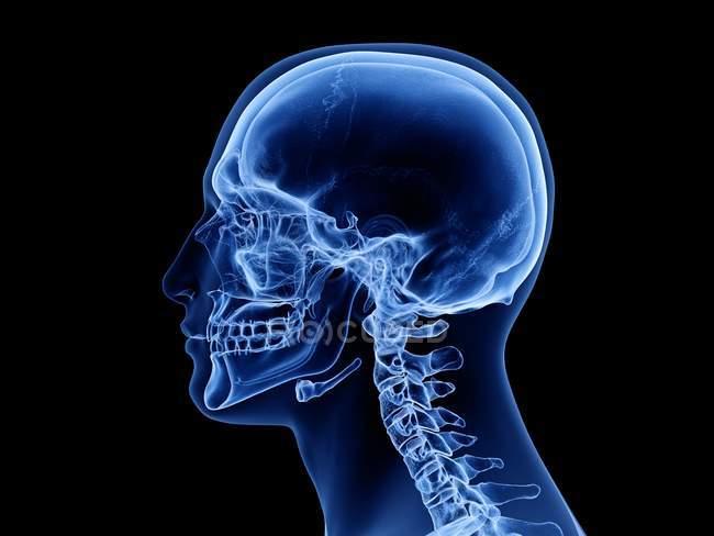 Silueta masculina abstracta con cráneo humano visible, ilustración por computadora . - foto de stock