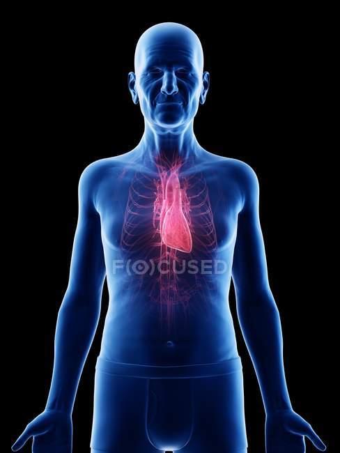 Цифрова ілюстрація анатомії чоловіка похилого віку.. — стокове фото