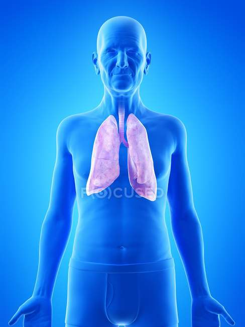 Digital illustration of senior man anatomy showing lungs. — Stock Photo