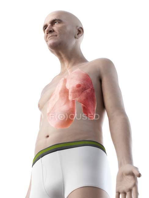 Ilustración digital de la anatomía masculina superior que muestra pulmones. - foto de stock
