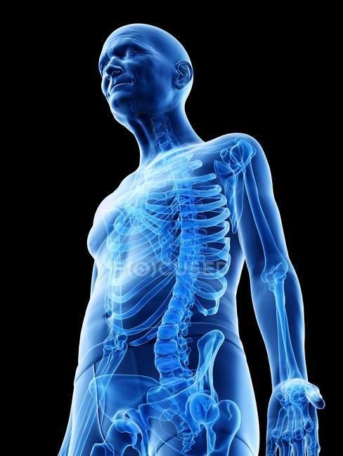 Ilustración digital de la anatomía del hombre mayor mostrando esqueleto . - foto de stock