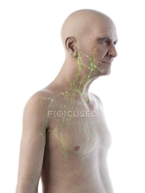 Ilustración digital de la anatomía del hombre mayor que muestra el sistema linfático . - foto de stock