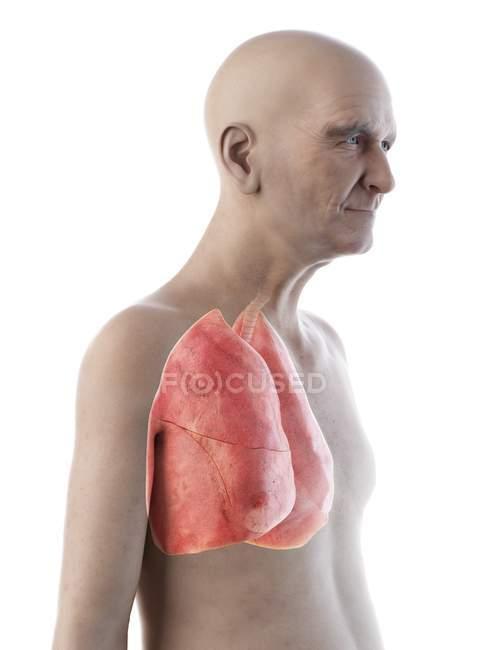 Digitale Illustration der Anatomie eines älteren Mannes mit Lungen. — Stockfoto