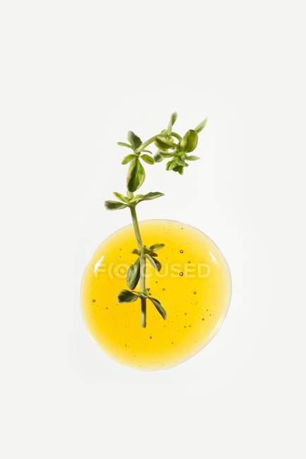 Miel et brindilles de thym, vue de dessus, mode de vie sain et concept de nourriture antioxydante . — Photo de stock