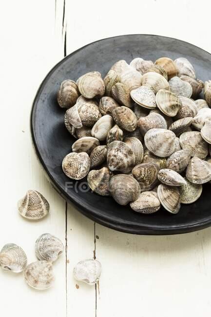Placa de almejas frescas de venus lista para la cocina . - foto de stock