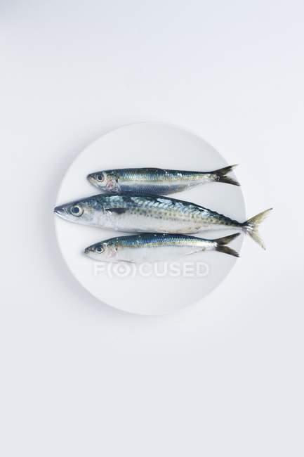 Prato de sarda e sardinhas, peixes oleosos, fonte de várias vitaminas . — Fotografia de Stock
