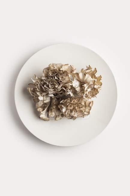 Maitake-Pilze Grifola frondosa auf rundem Teller, Polypore-Pilze. — Stockfoto