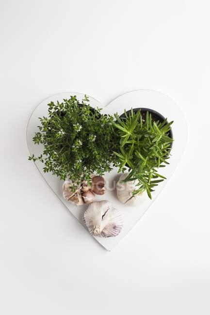 Romero, tomillo y ajo en forma de corazón .. - foto de stock