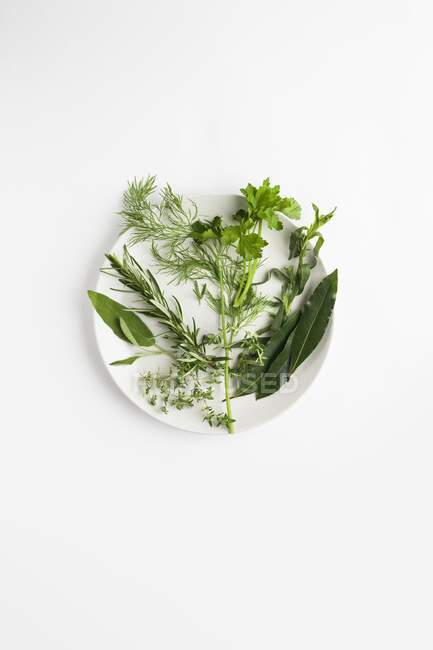 Ervas culinárias de manjericão, endro, coentro, alecrim, estragão, salva, folhas de louro e tomilho . — Fotografia de Stock