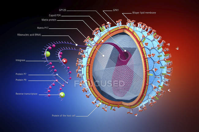 Abstract human immunodeficiency virus structure, scientific digital informative illustration. — Stock Photo