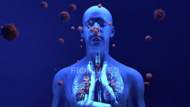 Conceptual illustration of coronavirus particles entering human lungs. — Stock Photo