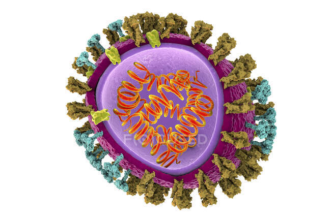 3D illustration of influenza virus particle structure — Stock Photo