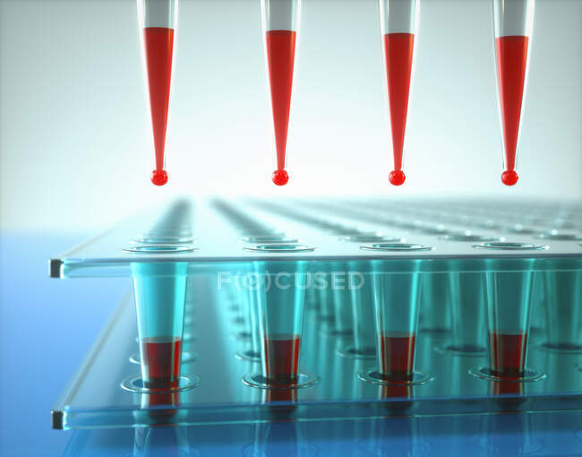 Microbiological research, illustration. Multi-channel pipette and multi-well plates in microbiology lab — Stock Photo