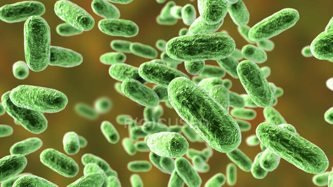 Whooping cough bacteria (Bordetella pertussis), computer illustration — стоковое фото