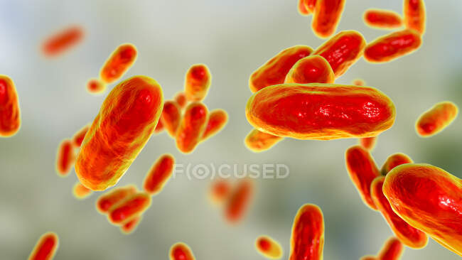 Whooping cough bacteria (Bordetella pertussis), computer illustration — Stock Photo