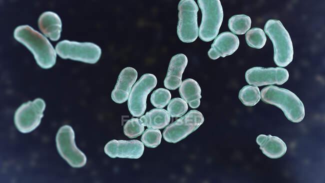 Malassezia skin fungus, computer illustration — Stock Photo