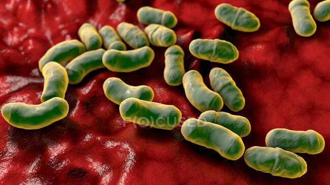 Malassezia fungo della pelle, illustrazione del computer — Foto stock