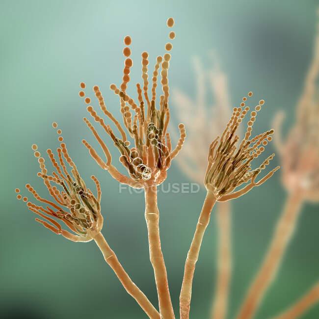 Hongos penicillium, ilustración por ordenador - foto de stock